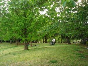 090503_green_green