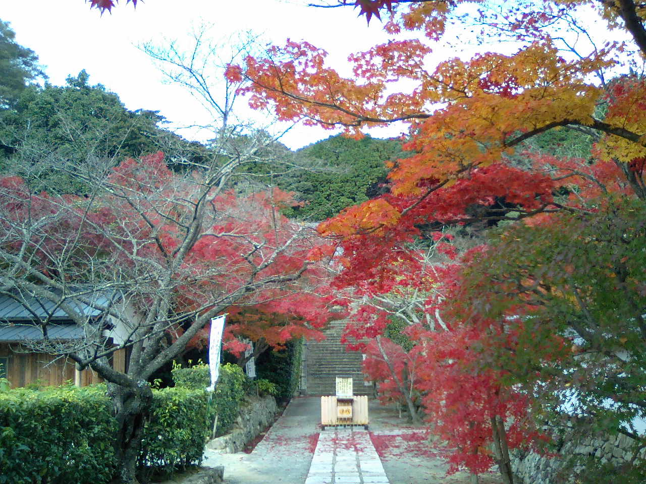 紅葉を求めて満願寺へ