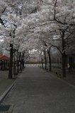 080416_sirakawa_03