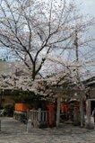 080416_sirakawa_07