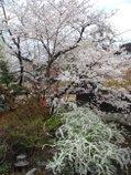 080416_sirakawa_10