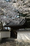 080418_nanzenji_10